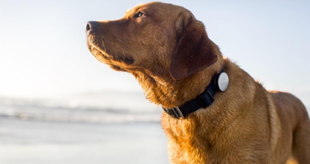 Whistle Activity Monitor – zadba o aktywność twojego psa