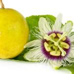 Passiflora kwiat na bezsenność