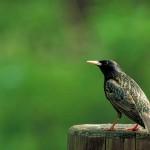Ponad 400 milinów ptaków mniej w Europie