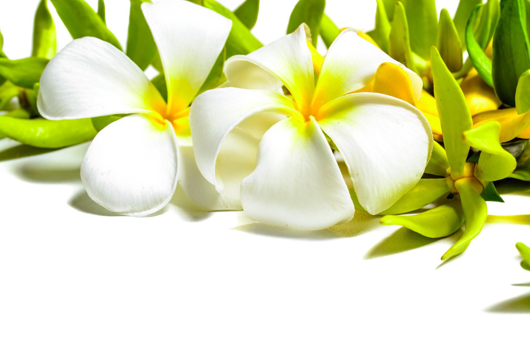Kwiaty Ylang-ylang