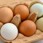 Nietypowe zastosowanie jajek
