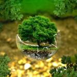 Drzewa bardziej ekologiczne ?