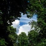 Ile drzew ocalił Internet?