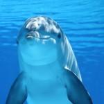 Google świętuje Dzień Oceanów i schodzi pod wodę