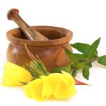 Lecznicze właściwości oleju z wiesiołka dwuletniego