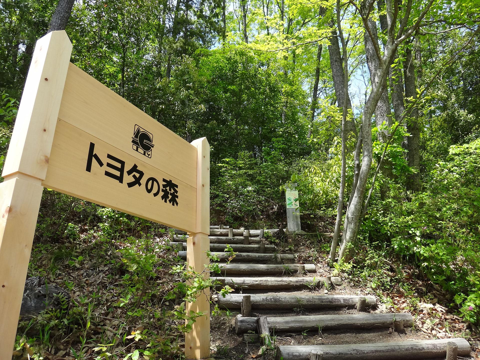 Toyota nagrodzona za prowadzenie wzorcowego parku leśnego