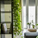 10 roślin doniczkowych, które oczyszczą powietrze w Twoim domu