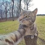 Kot, który uwielbia robić selfie.  Poznajcie Manny'ego