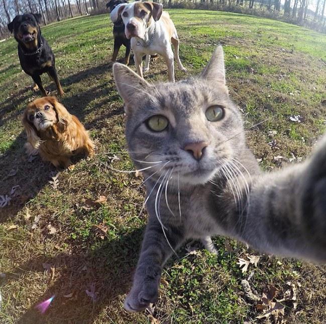 Kot ktory uwielbia robic selfie Poznajcie Manny'ego.2jpg