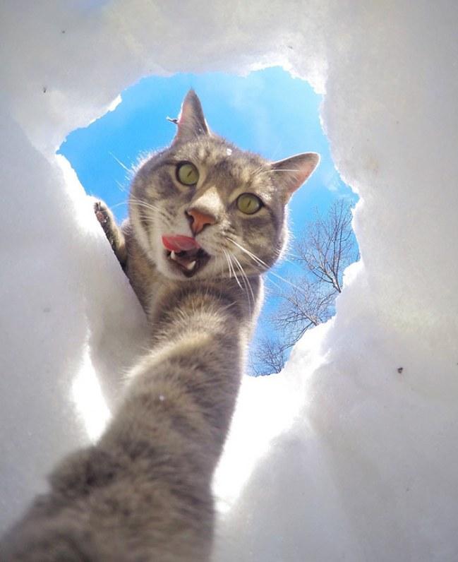 Kot ktory uwielbia robic selfie Poznajcie Manny'ego.4jpg