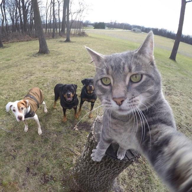 Kot ktory uwielbia robic selfie Poznajcie Manny'ego.5jpg