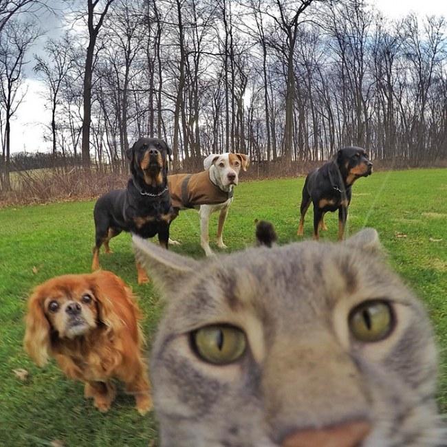 Kot ktory uwielbia robic selfie Poznajcie Manny'ego.8jpg