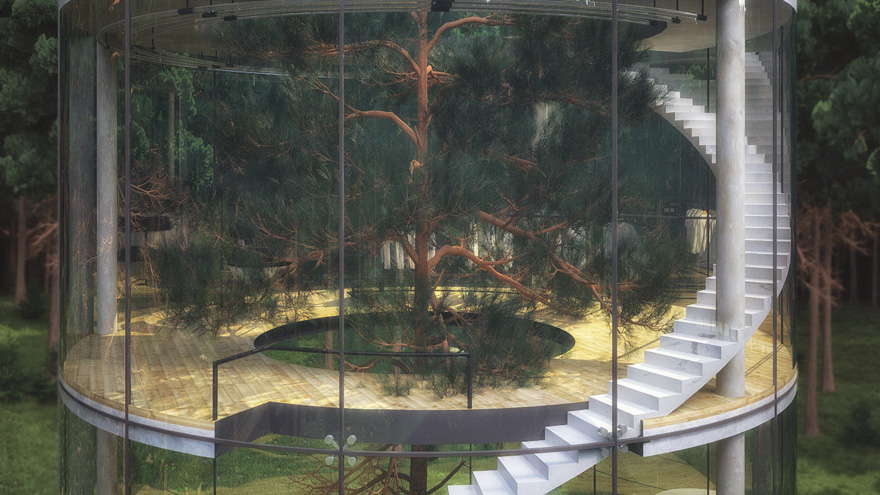 Oszałamiajacy szklany dom, wybudowany wokol drzewa5