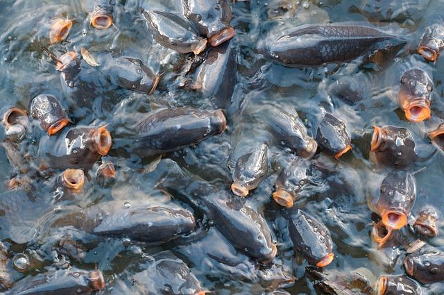 fish-818201_640