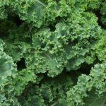Jarmuż – warzywo, które może chronić przed rakiem. Wysoka skuteczność potwierdzona badaniami