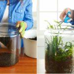 Domowe Terraria jako  doskonały wzmacniacz tlenu: z tej instrukcji dowiesz się jak je posadzić