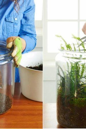 Domowe Terraria jako doskonaly wzmacniacz tlenu -z tej instrukcji dowiesz się jak je posadzic