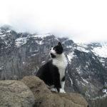 Ten kot uratował człowieka, który zabłądził w szwajcarskich górach