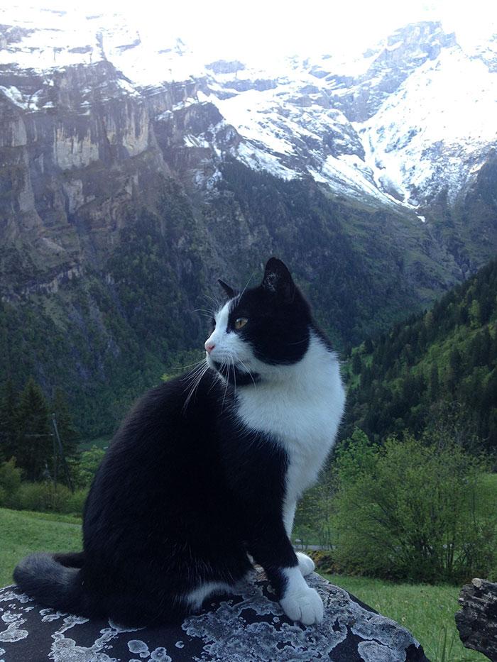 Ten kot uratowal czlowieka ktory zabladzil w szwajcarskich gorach5