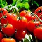 Wiesz co jesz? Jak odróżnić naturalnego pomidora od pomidora GMO? Dwa skuteczne sposoby