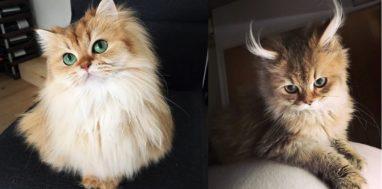 10-najpiekniejszych-kotow-na-swiecie-01