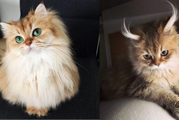 10 najpiękniejszych kotów na świecie (galeria)