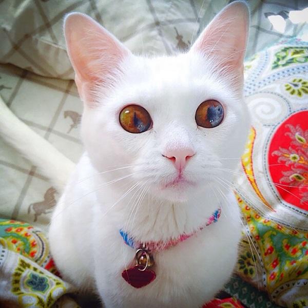 10-najpiekniejszych-kotow-na-swiecie-10