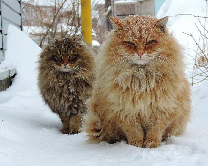 10-najpiekniejszych-kotow-na-swiecie-10jpg