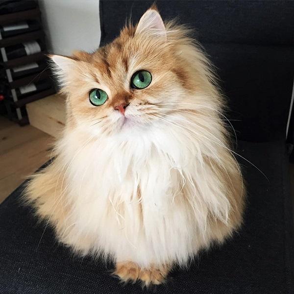 10-najpiekniejszych-kotow-na-swiecie-2