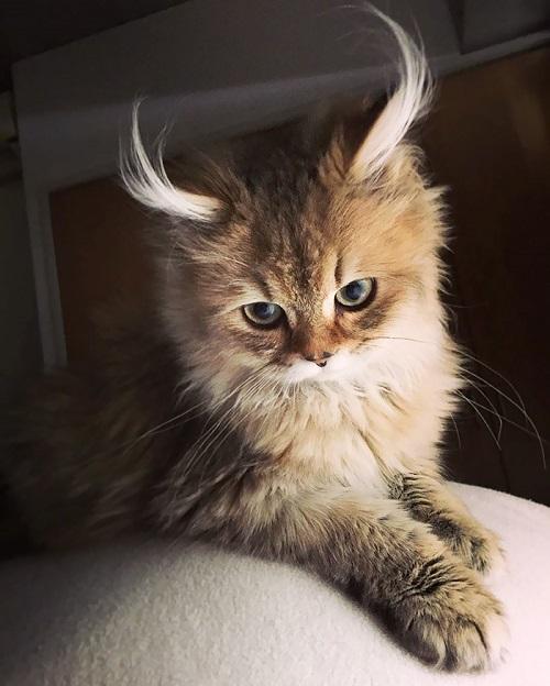 10-najpiekniejszych-kotow-na-swiecie-4