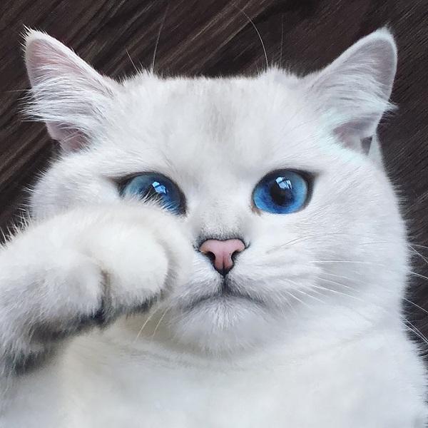10-najpiekniejszych-kotow-na-swiecie-5