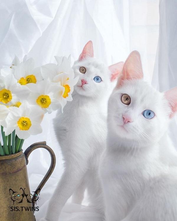 10-najpiekniejszych-kotow-na-swiecie-7