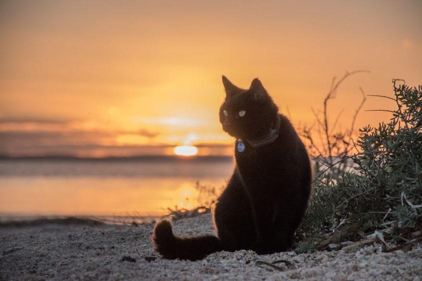 Podróż życia z kotem
