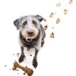 Adopcja zwierzaka – krok po kroku
