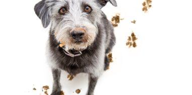 Adopcja zwierzaka